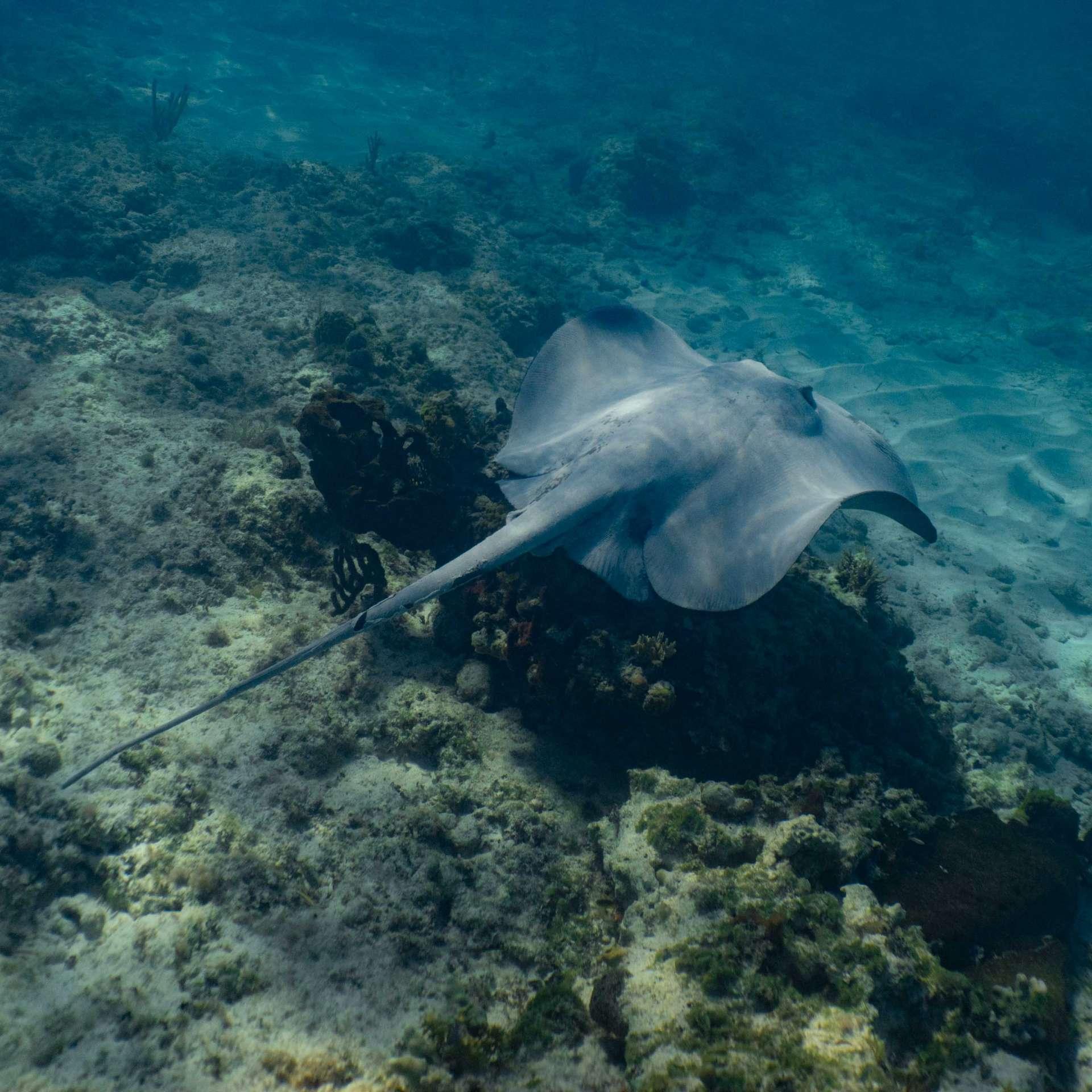 Bahamas Long Island snorkeling cape santa maria beach 8