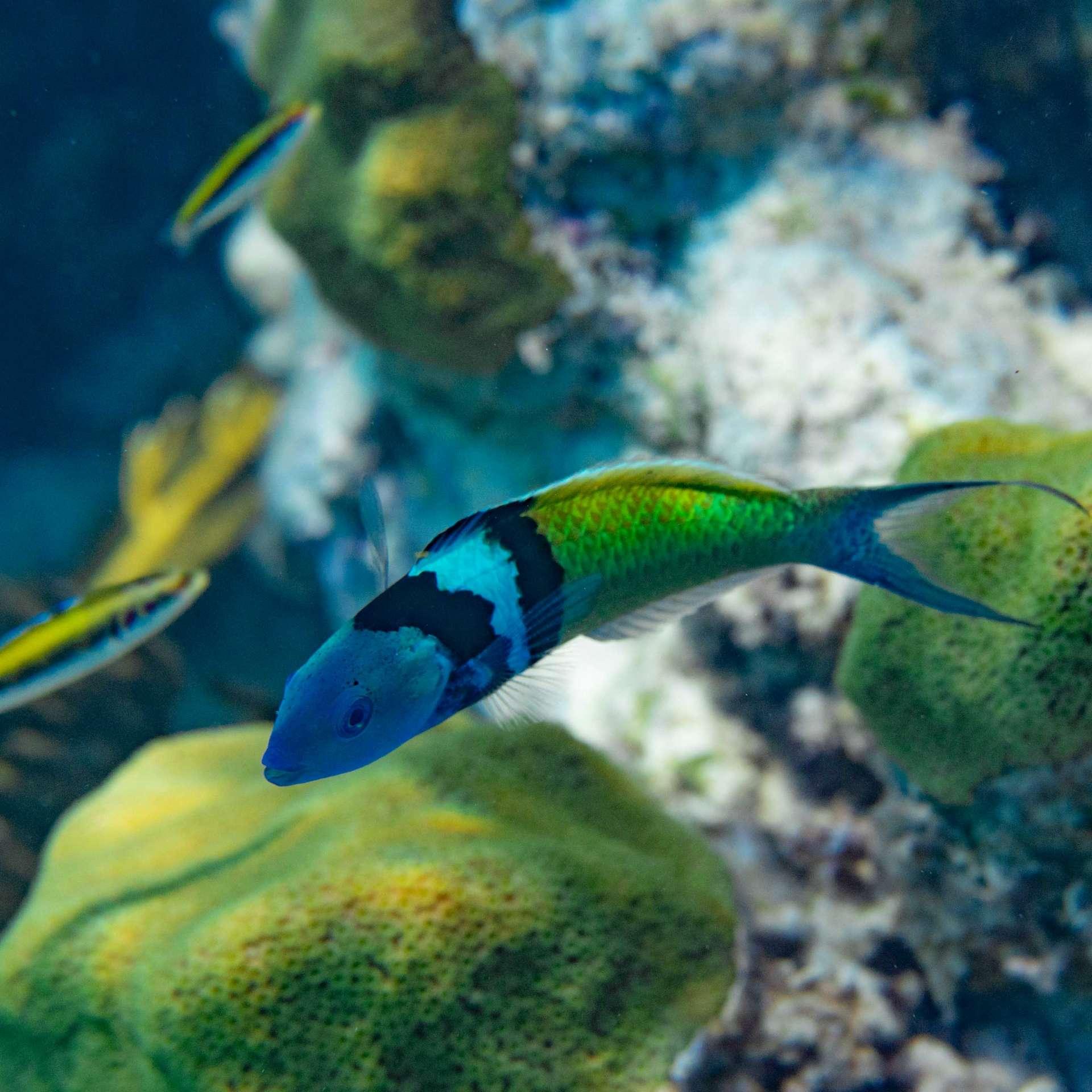 Bahamas Long Island snorkeling cape santa maria beach 7
