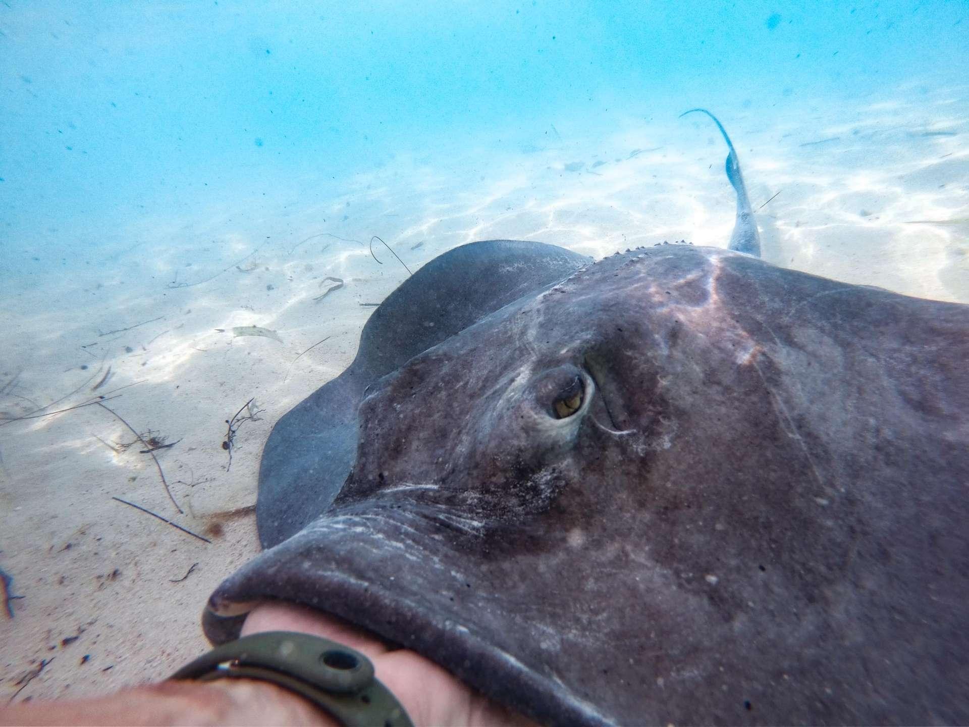 Feeding stingrays Chat N Chill Stocking Island Exuma Bahamas