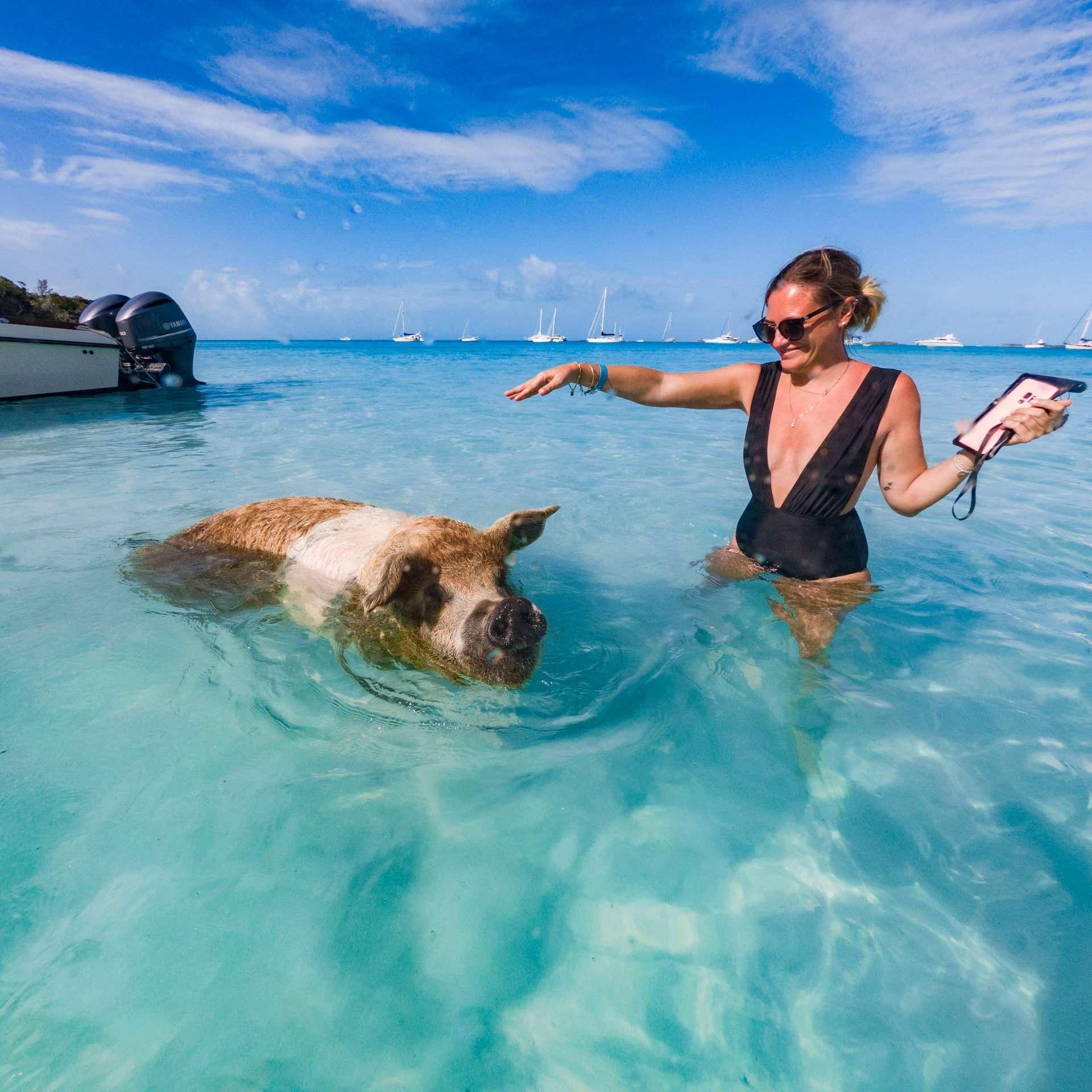 swimming with pigs beach exuma cays bahamas
