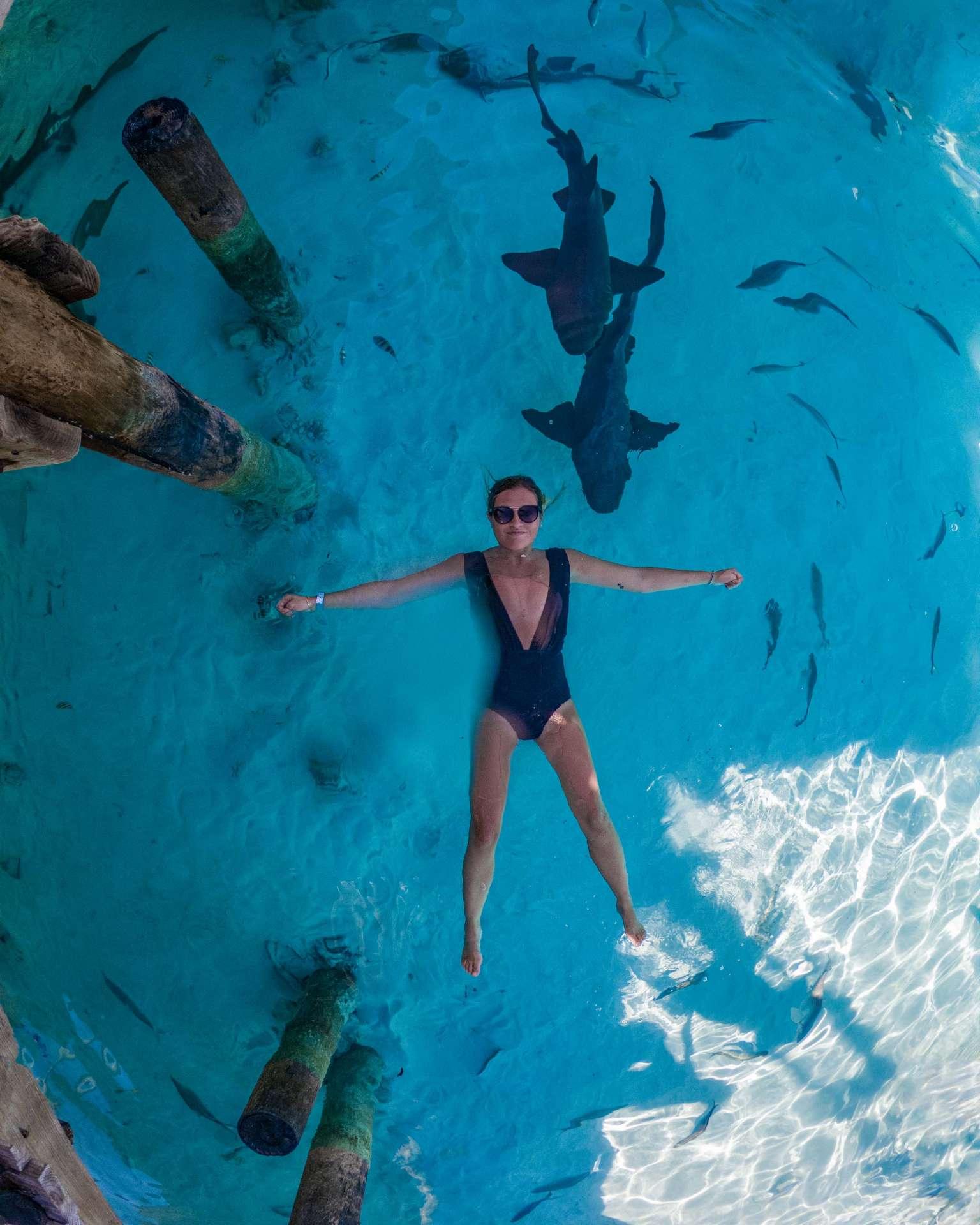 swimming with sharks exuma cays bahamas 2