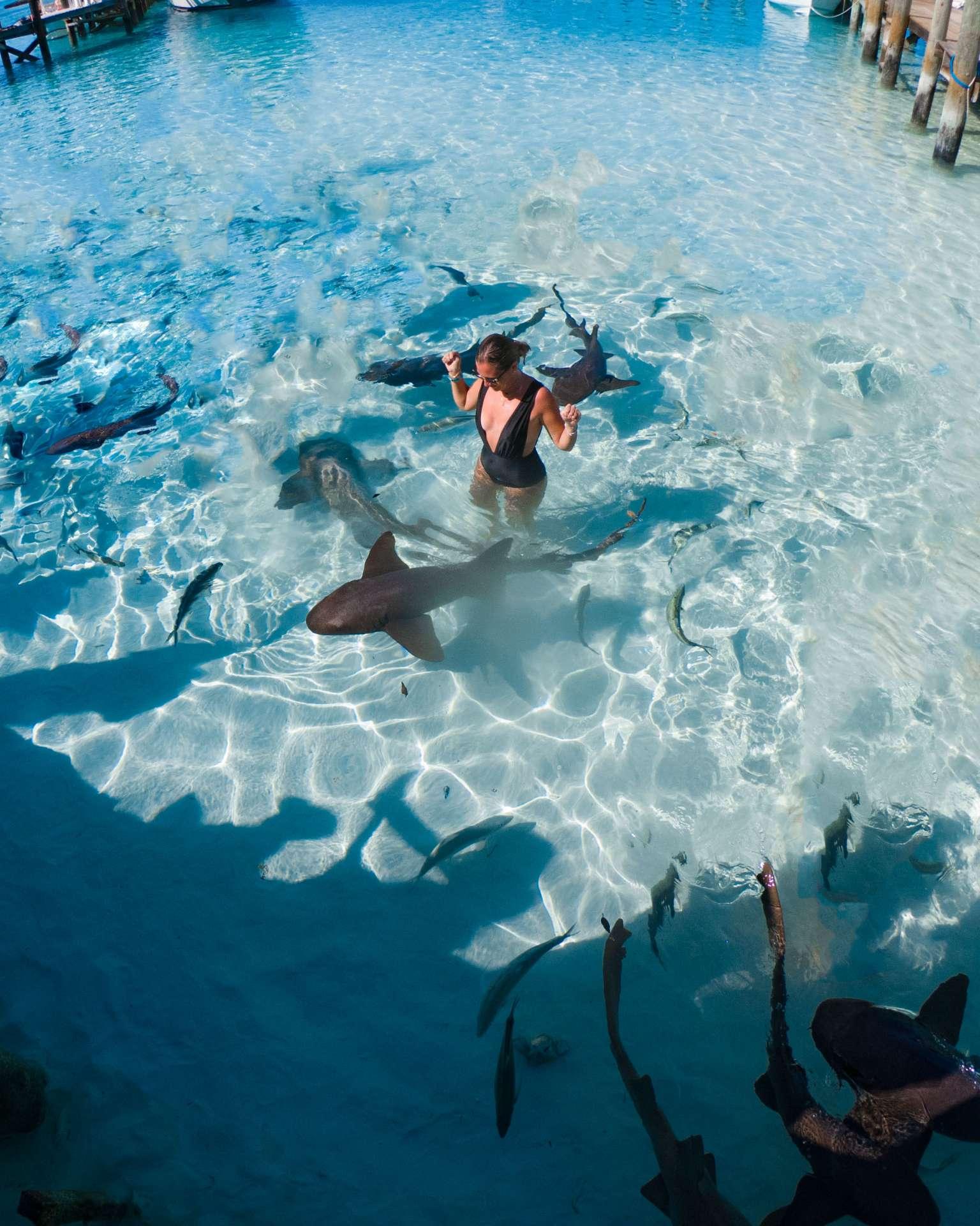 swimming with sharks exuma cays bahamas 3