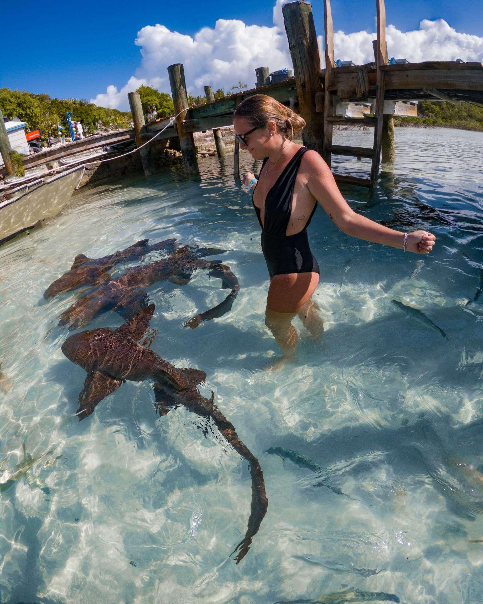 swimming with sharks exuma cays bahamas