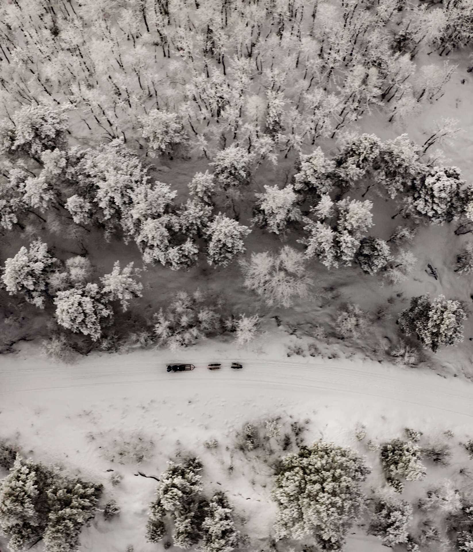 Tromso Dog Sledding drone aerial norway 2
