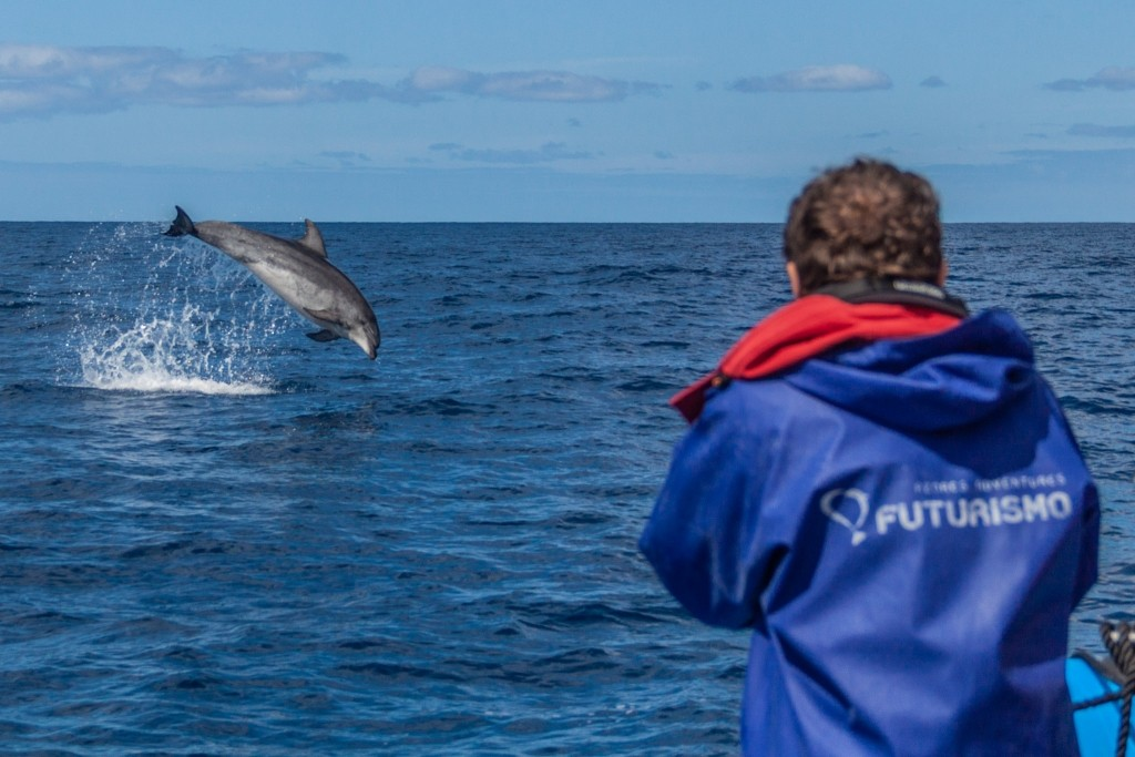 Azores Sao Miguel Ponta Dalgada Whale Watching Futurismo Dolphin Watching