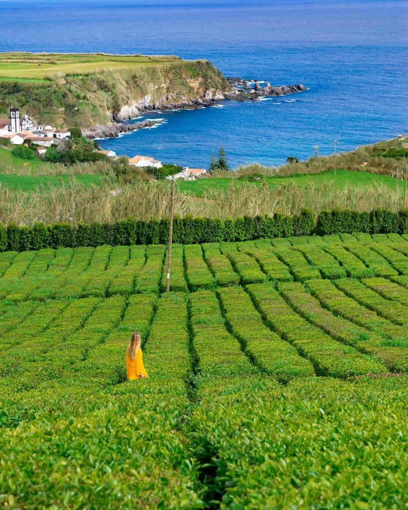 Azores Sao Miguel Tea Plantation Porto Formoso 2