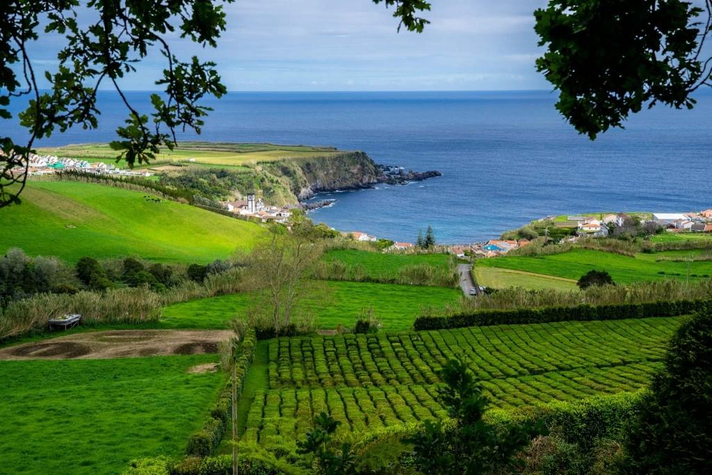 Azores Sao Miguel Tea Plantation Porto Formoso 3