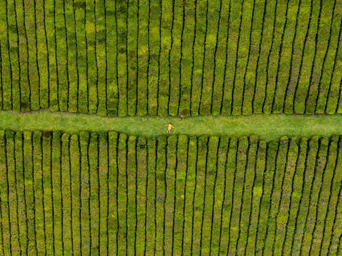 Azores Sao Miguel Tea Plantation Porto Formoso