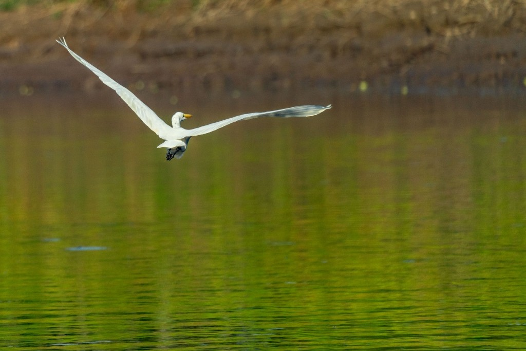 amazon forest river iquitos bird flying