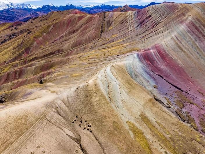 Rainbow Alpaca - Palcoyo Rainbow Mountain Cusco Peru Aerial Drone