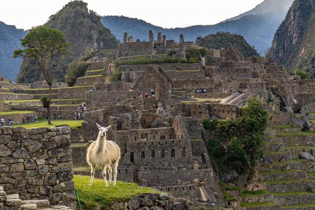 Machu Picchu Lama
