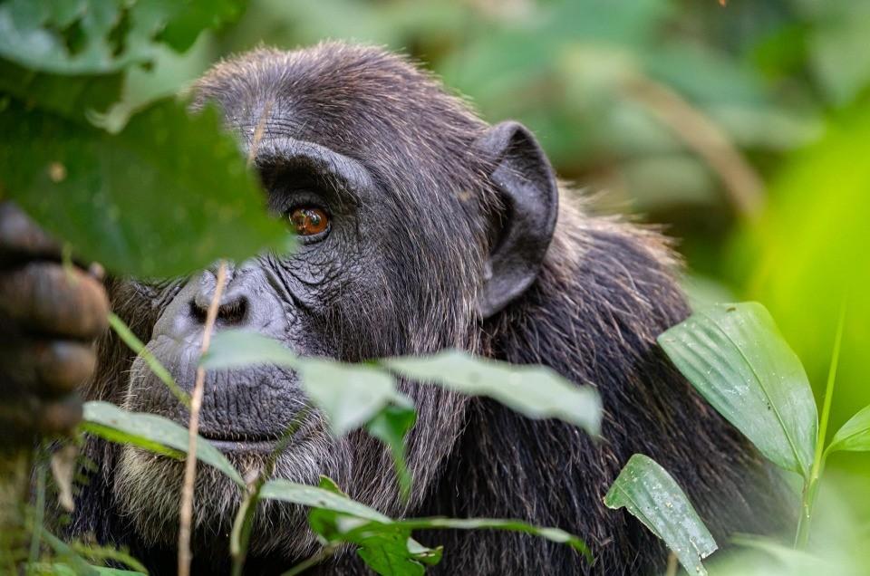 Wildlife safari in Uganda: where to go?