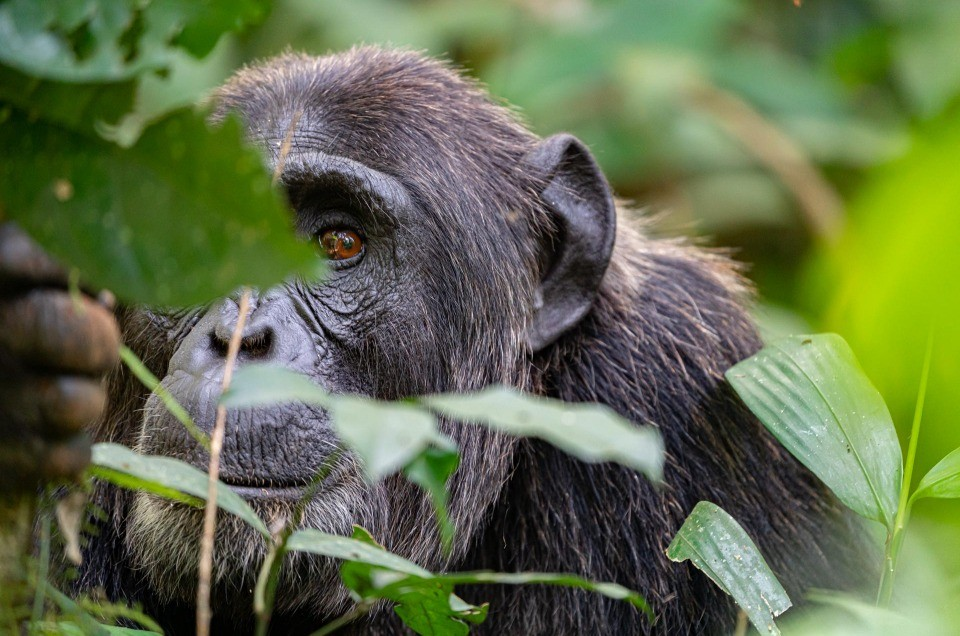 Wildlife safari in Uganda: where to go?