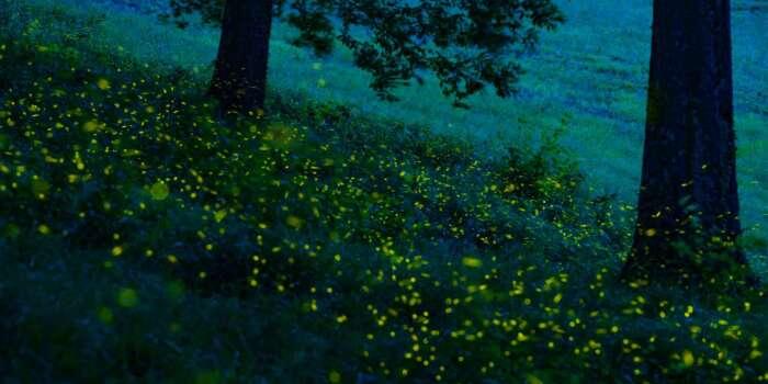 lucciole colli bolognesi firefly fireflies shooting photography