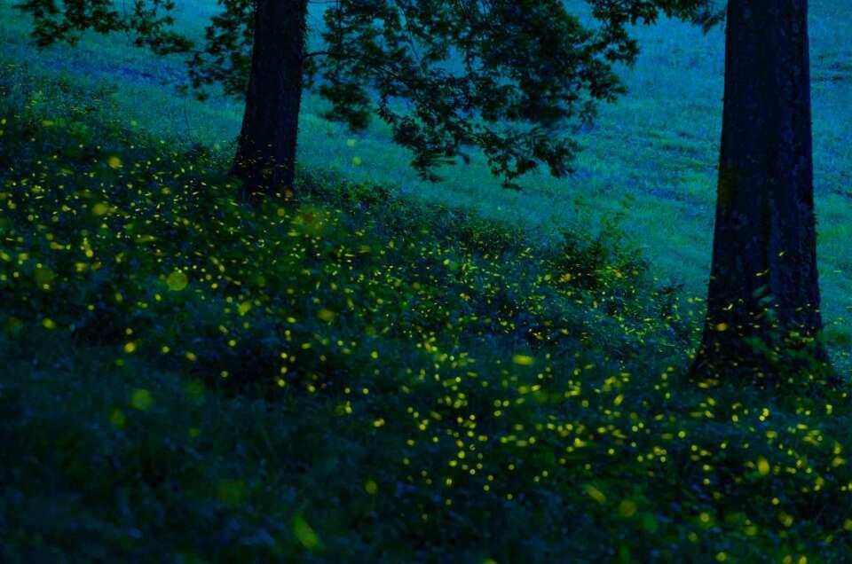 Shooting fireflies in a summer night