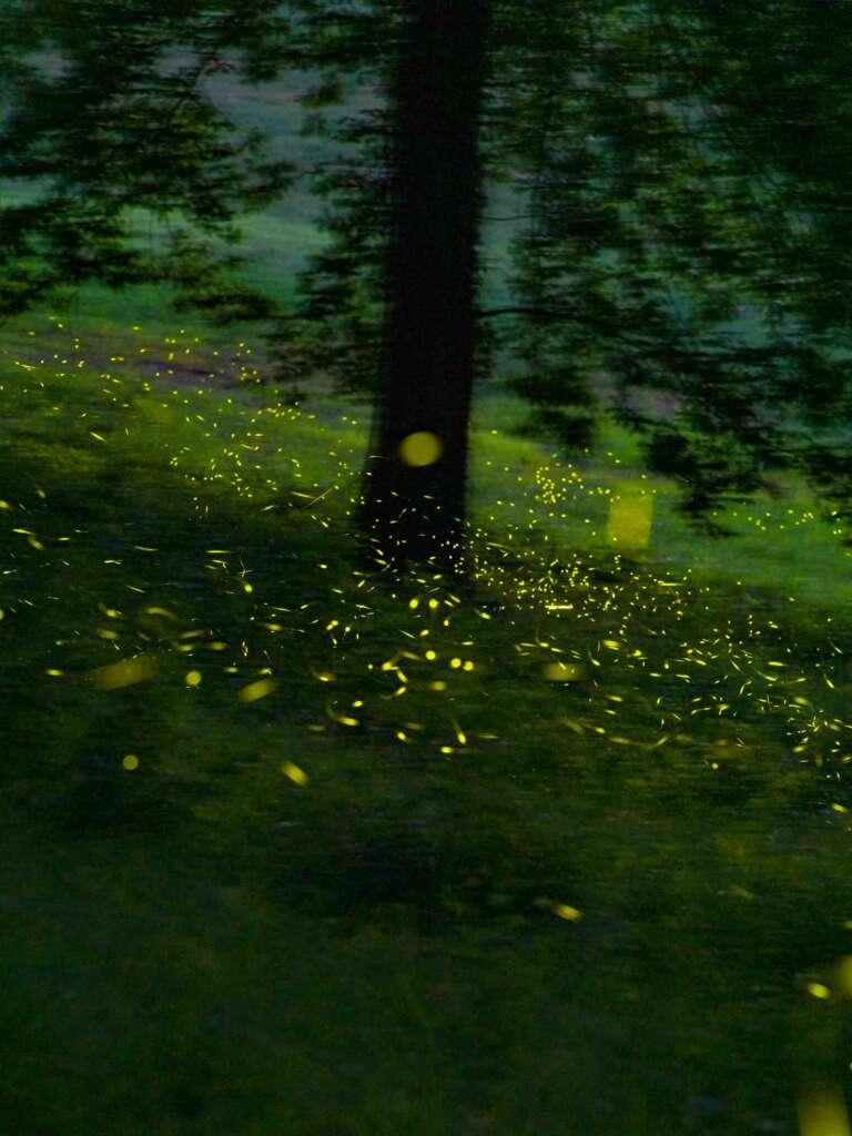 lucciole colli bolognesi firefly fireflies shooting photography 2